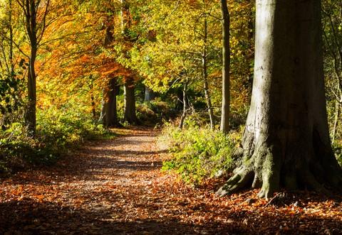 Woodland pathway in Autumn